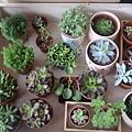 多肉植物Succulents