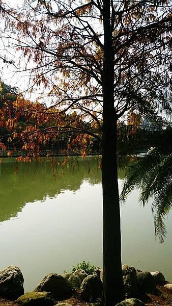 台北.內湖/碧湖公園