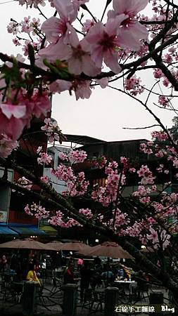 石碇老街,櫻花旅行