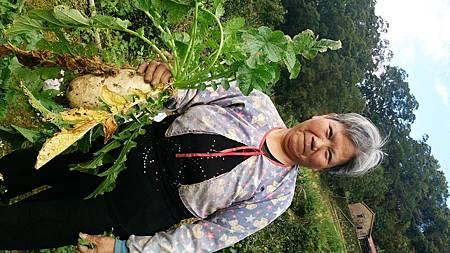媽媽的菜園-蘿蔔收成