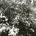 石碇下雪了,2016/1/24