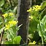 蜜蜂與花.JPG