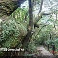 石碇皇帝殿-往東峰 (13).JPG