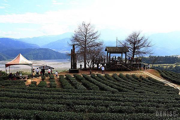IMG_8948.jpg  玉蘭茶園