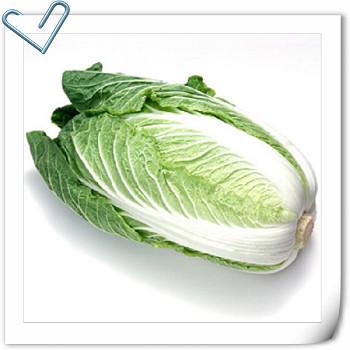食材營養講座 – 白菜 / はくさい / Chinese Cabbage