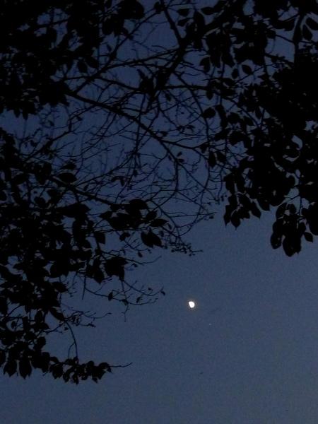 延著桂川及岸邊老樹襯托的夜色  散步回家