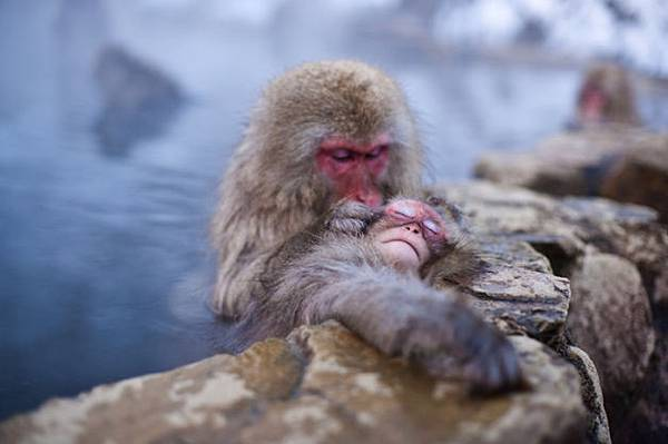 winter_monkey_04