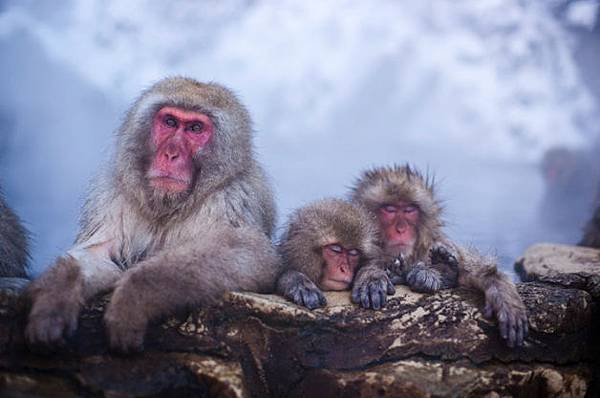 winter_monkey_02