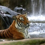 wCbGSEmalacca zoo3.jpg