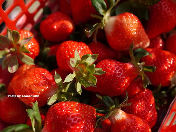 順路來草莓園06.jpg