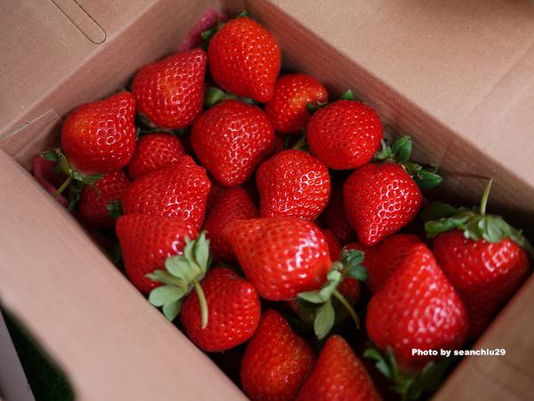 順路來草莓園08.jpg