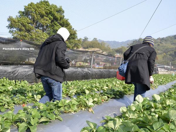順路來草莓園14.jpg