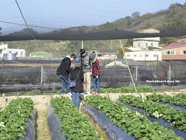 順路來草莓園18.jpg
