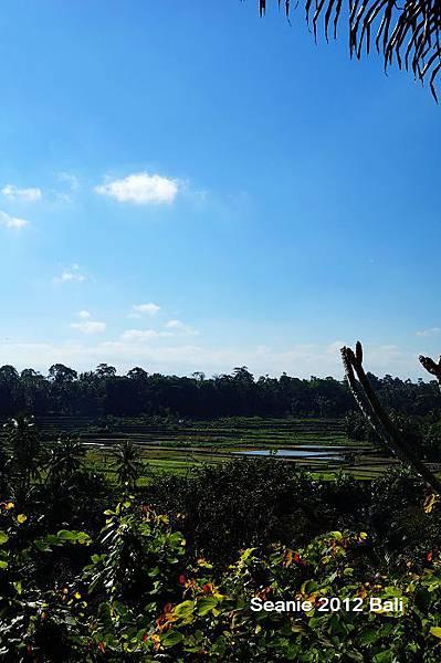 34來峇里島這麼多年算是正式踏進烏布區