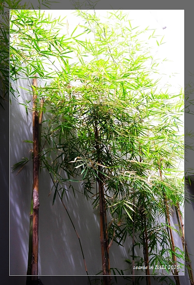 10房門外的竹子.JPG