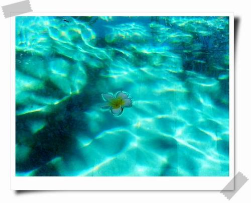 14 浮在水上的雞蛋花.jpg