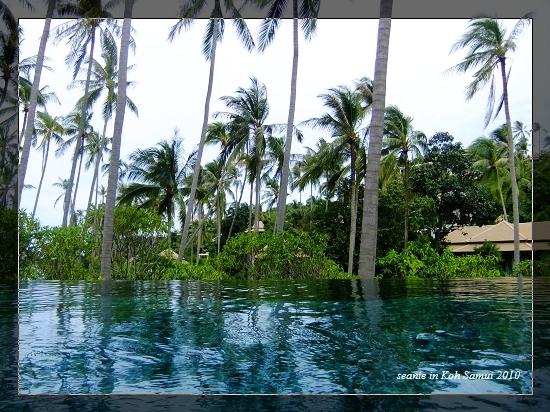 30午後泳池.jpg