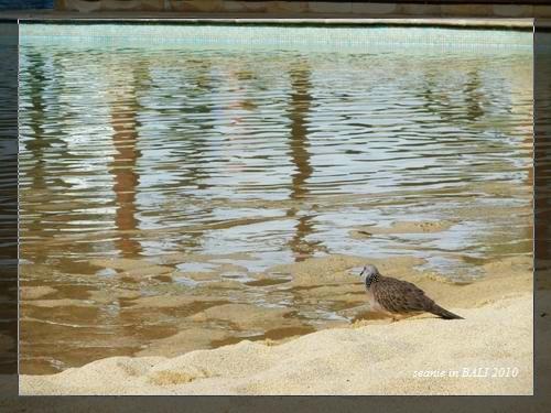 17這兒的鳥一點也不怕生.jpg