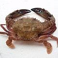 F石蟹1 (640x480).jpg