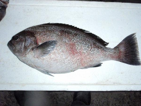 F扁過魚2 (640x480).jpg