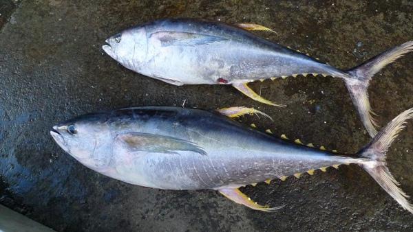 F鮪魚生魚片 (640x360).jpg