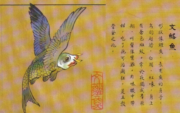 文鰩魚.jpg