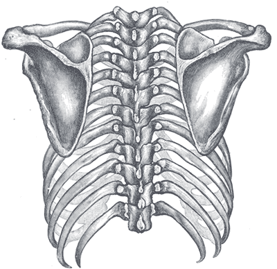 scapula-intro.png