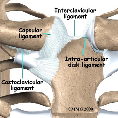 shoulder_stclav_anatomy03.jpg