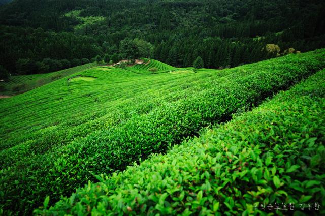 greenlandbbe7babb.jpg