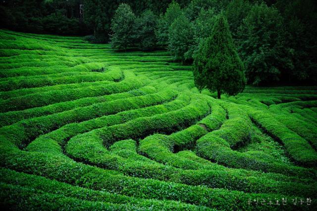 greenteabbe7babb.jpg