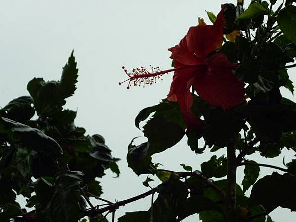 舉起相機就風雨如晦。避秦舊舍