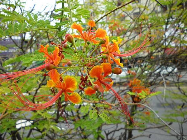 蝴蝶舞秋風。台中文化中心