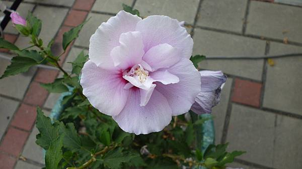 鄰居的花。五權南路花壇