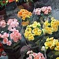 麗格海棠的季節。國光花市