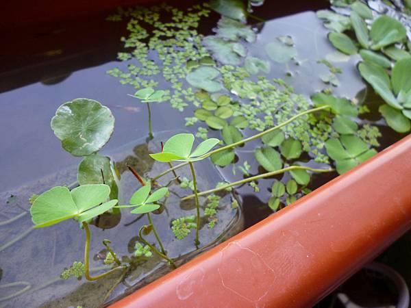 家養小水生槽之一