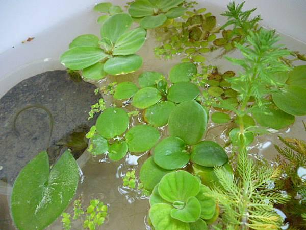 第二個水生植物箱