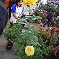 冬天的玫瑰之二。國光花市
