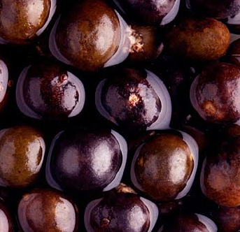 巴西莓.png