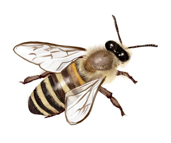 電子報用蜜蜂.png