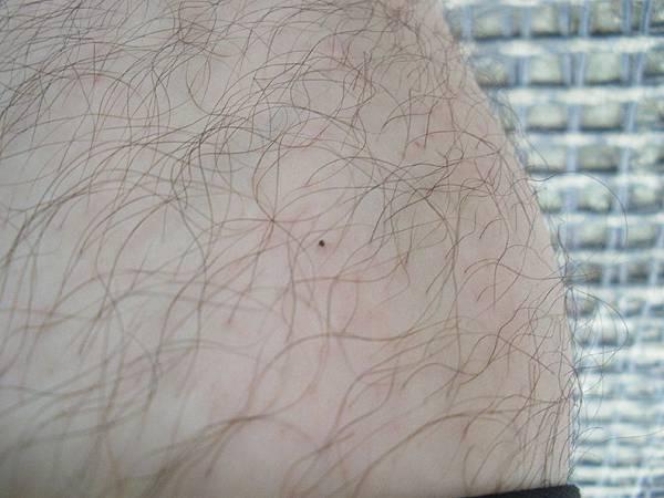 確定在風大的情況下還有小黑蚊.JPG