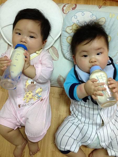 鮮奶、奶粉、羊奶營養