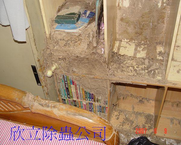 白蟻在書架上築巢,連書都被蟻巢包覆著(001).jpg