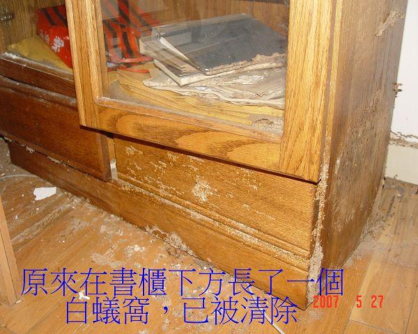 書櫃下方長了一個蟻窩-1(001).jpg