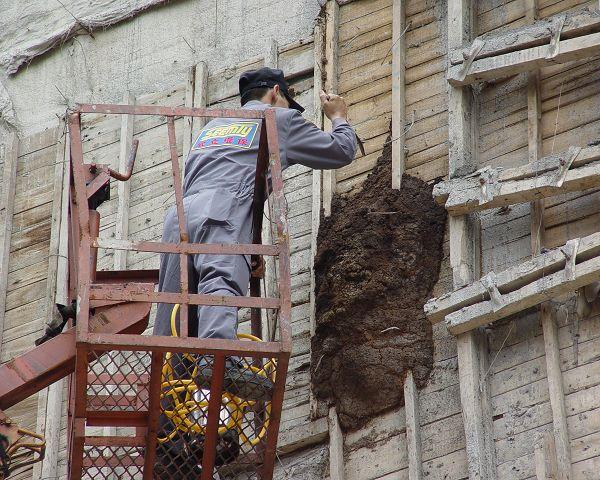 在大樓外牆長了一個好大的白蟻窩,需以吊車上去處理。(003).jpg