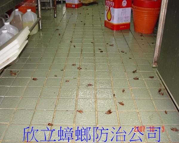 除蟑螂後到處可見的蟑螂屍體 (4)(001).jpg