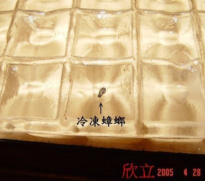 冰塊裡的冷凍德國蟑螂