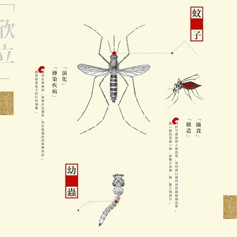 登革熱蚊子.png