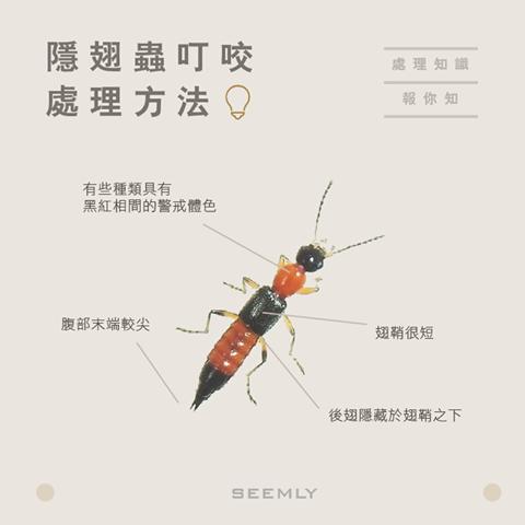 隱翅蟲.png
