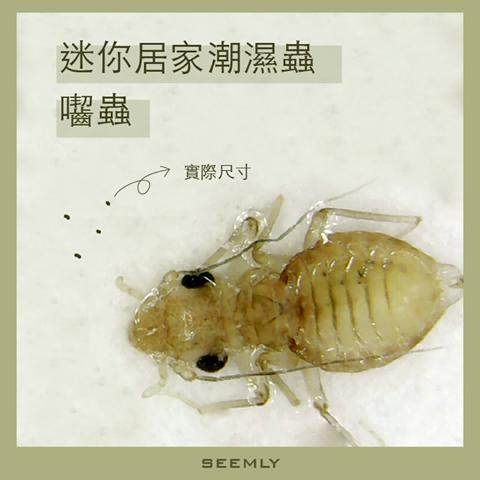 囓蟲.png