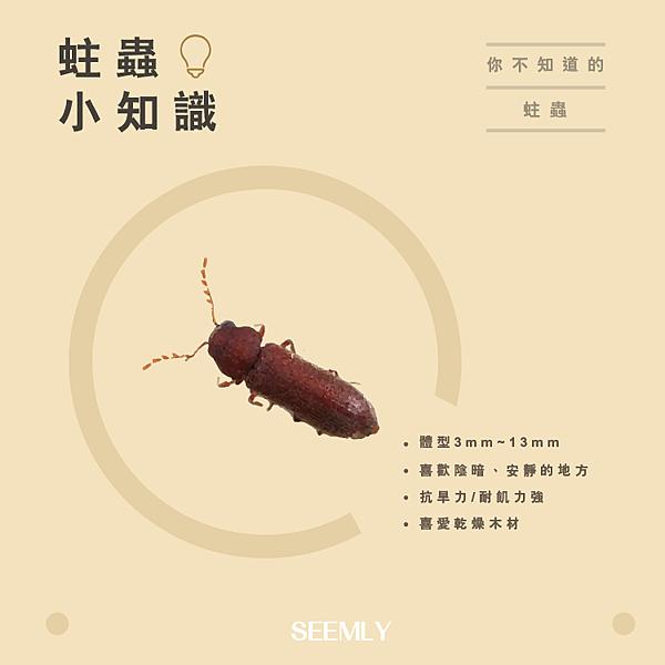 蛀蟲.png